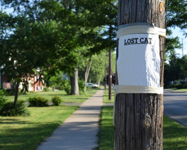 失踪宣告の手続の流れと注意点、失踪者が見つかった場合の取消方法