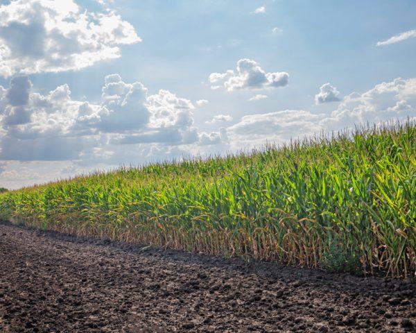 農地を相続する前に絶対に知っておくべき5つのこと